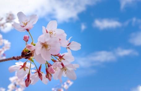 「春」在宅医療NOW 2021年4月